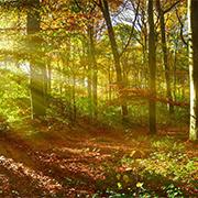 Wald-im-Sonnenschein_thump